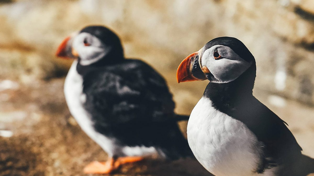 5 Ways Animals Will Help You Get More Business